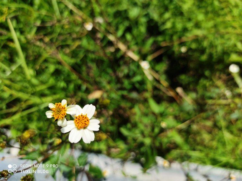 Hasil Foto Kamera Xiaomi Redmi Note 9 Pro