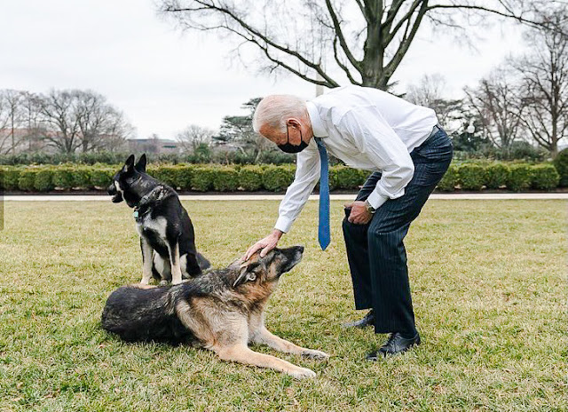 President Biden with his two dogs on the White House lawn