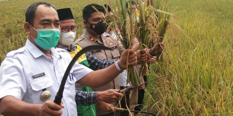 Camat Meranti Bersama Kapolsek Kisaran Kota dan Ketua Baznas Kabupaten Asahan Hadiri Panen Raya