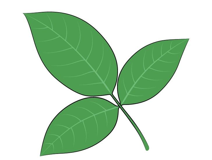Gambar daun mawar
