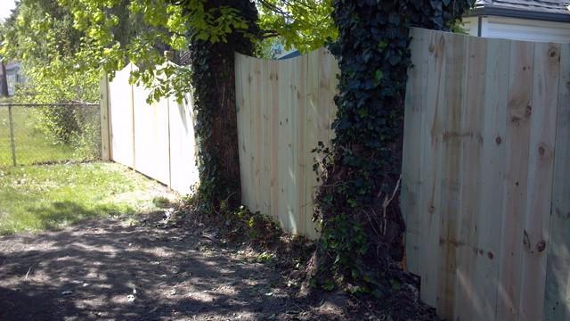 กำแพงบ้านและต้นไม้ใหญ่