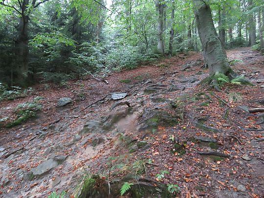 Fragment leśnego odcinka szlaku.