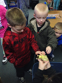 Boy in green coat petting a baby chick