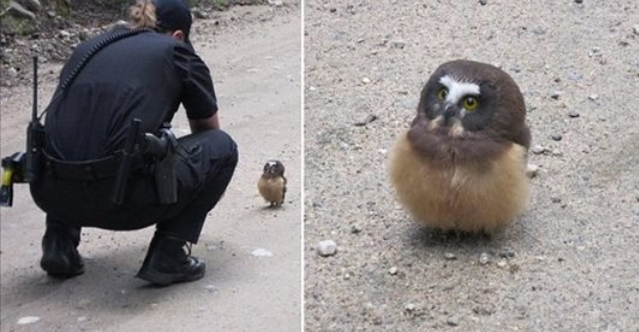 Colorado policeman's cute encounter with baby owl is guaranteed to melt your heart