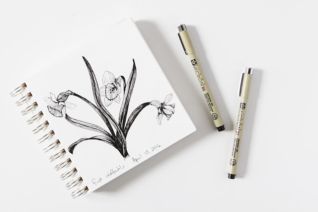 daffodils, sketches, sketchbook, pen and ink, black and white, Anne Butera, My Giant Strawberry