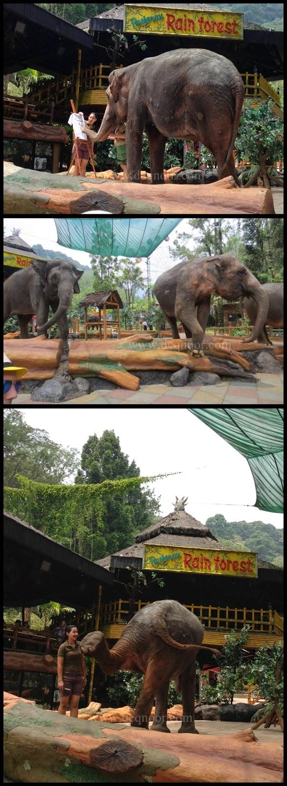 Elephant Show Taman Safari Indonesia 2