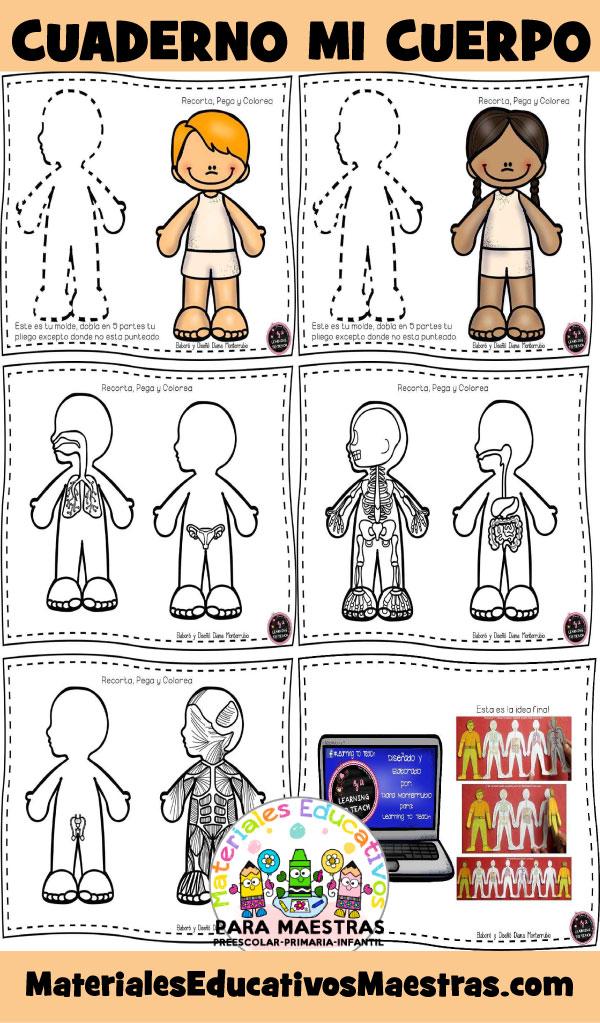 fichas-aprender-cuerpo-humano