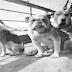 Οι σκύλοι που βρίσκονταν στον Τιτανικό...