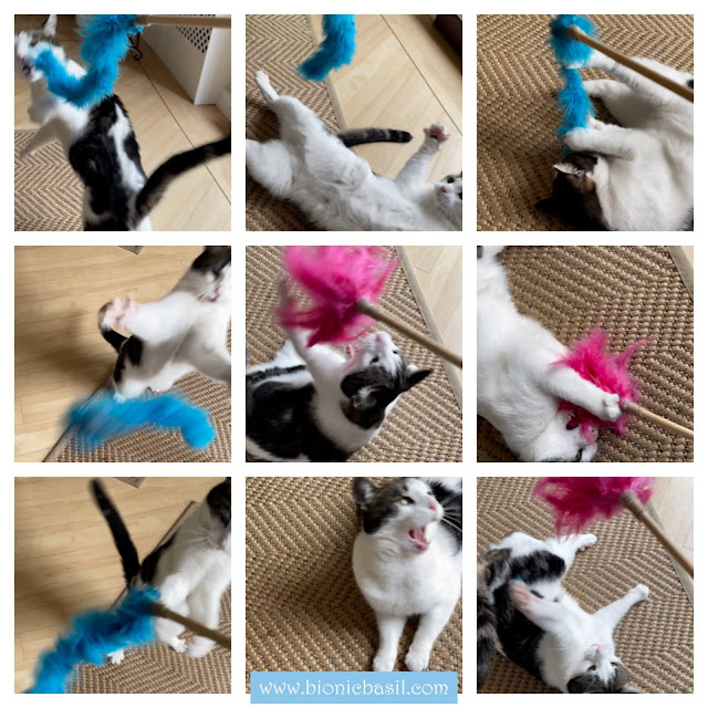 Friday Fluffers at BBHQ ©BionicBasil® Melvyn Product Testing New Kwerky Kat Boutique Toys