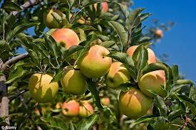 fruit farm business plan