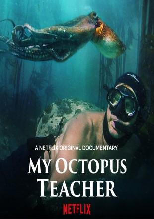 My Octopus Teacher 2020 English HDRip 720p