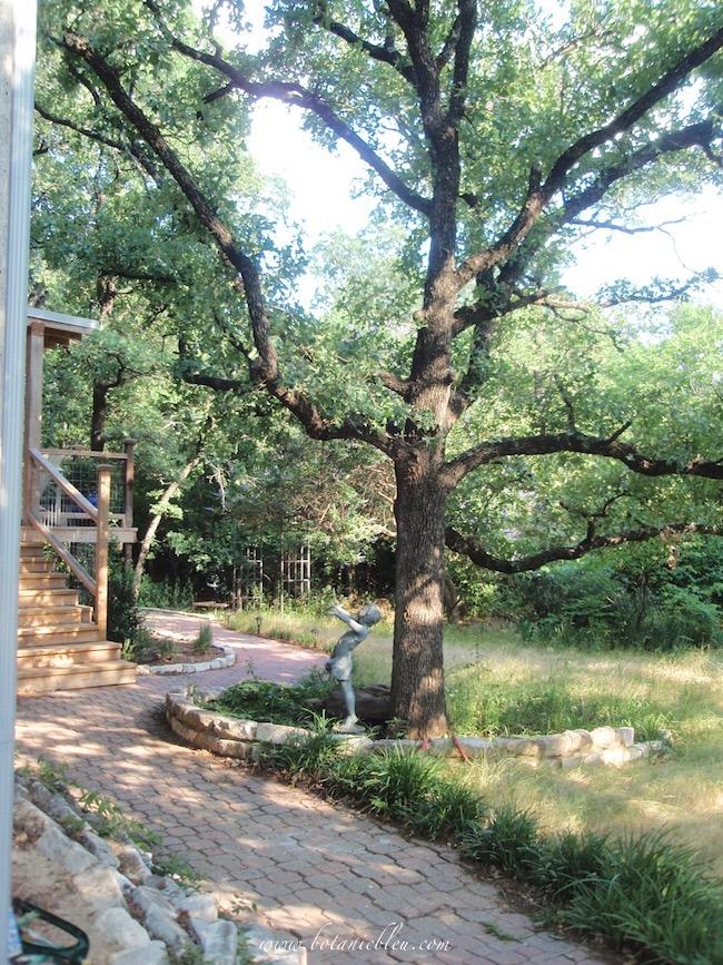 Backyard sidewalk around oak tree with girl statue