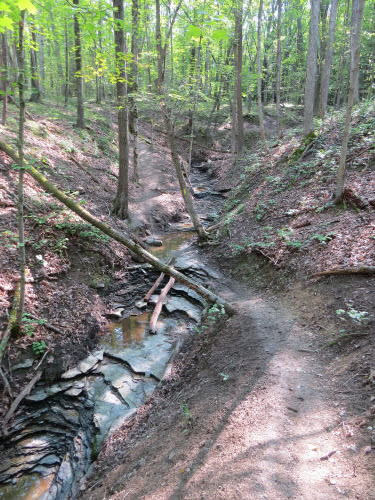 rocky gully