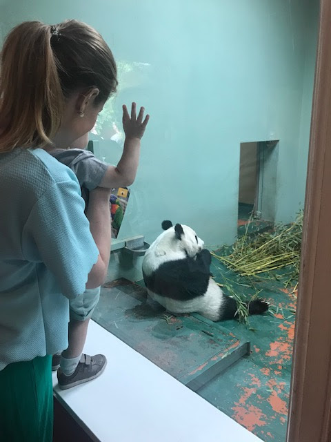 Edinburgh Zoo, Zoo, Giant Panda, Pandas