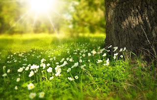 8 benefits of the sun for plants in full