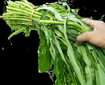 cara budidaya tanaman kangkung darat