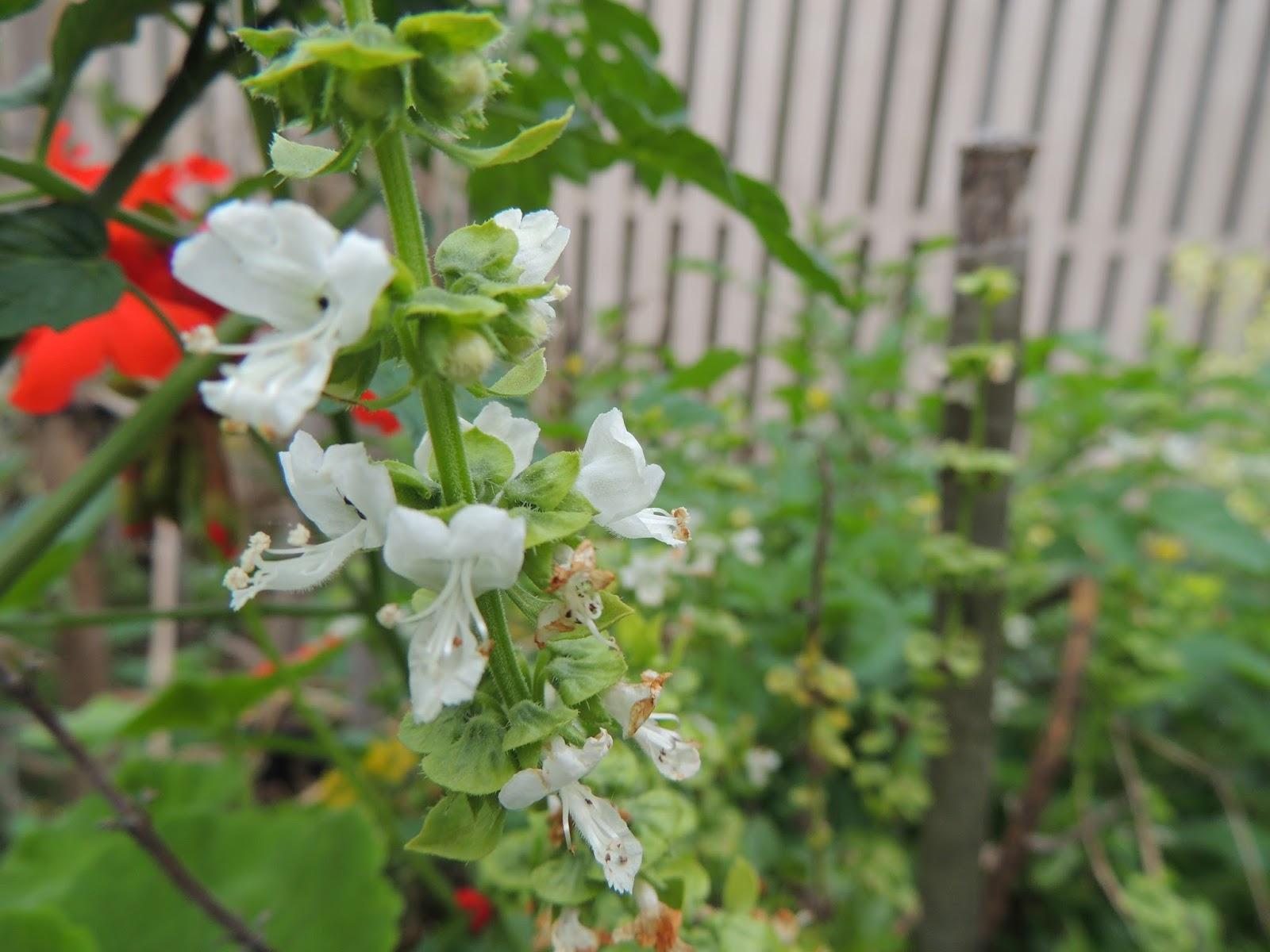 Whitecottage flowers make me happy Flowers that make you happy
