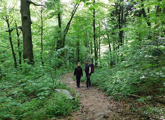 Ścieżka szlaku wprowadza nas w bukowo-jodłowy las.