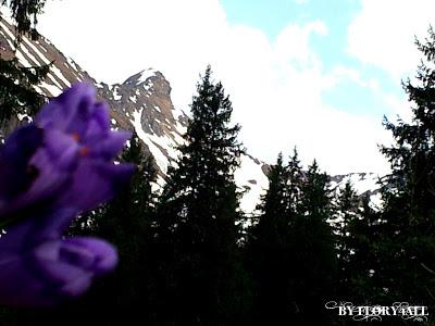 iarba de un verde viu presarata cu flori