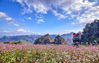 flower in Ha Giang