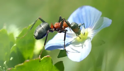 ants-have-two-stomachs