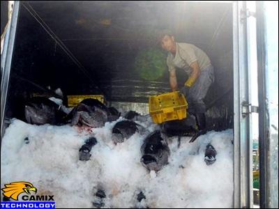 Công ty cung cấp thiết bị xử lý nước thải thủy sản - Biện pháp vận chuyển cá sống