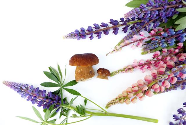 люпины и грибы