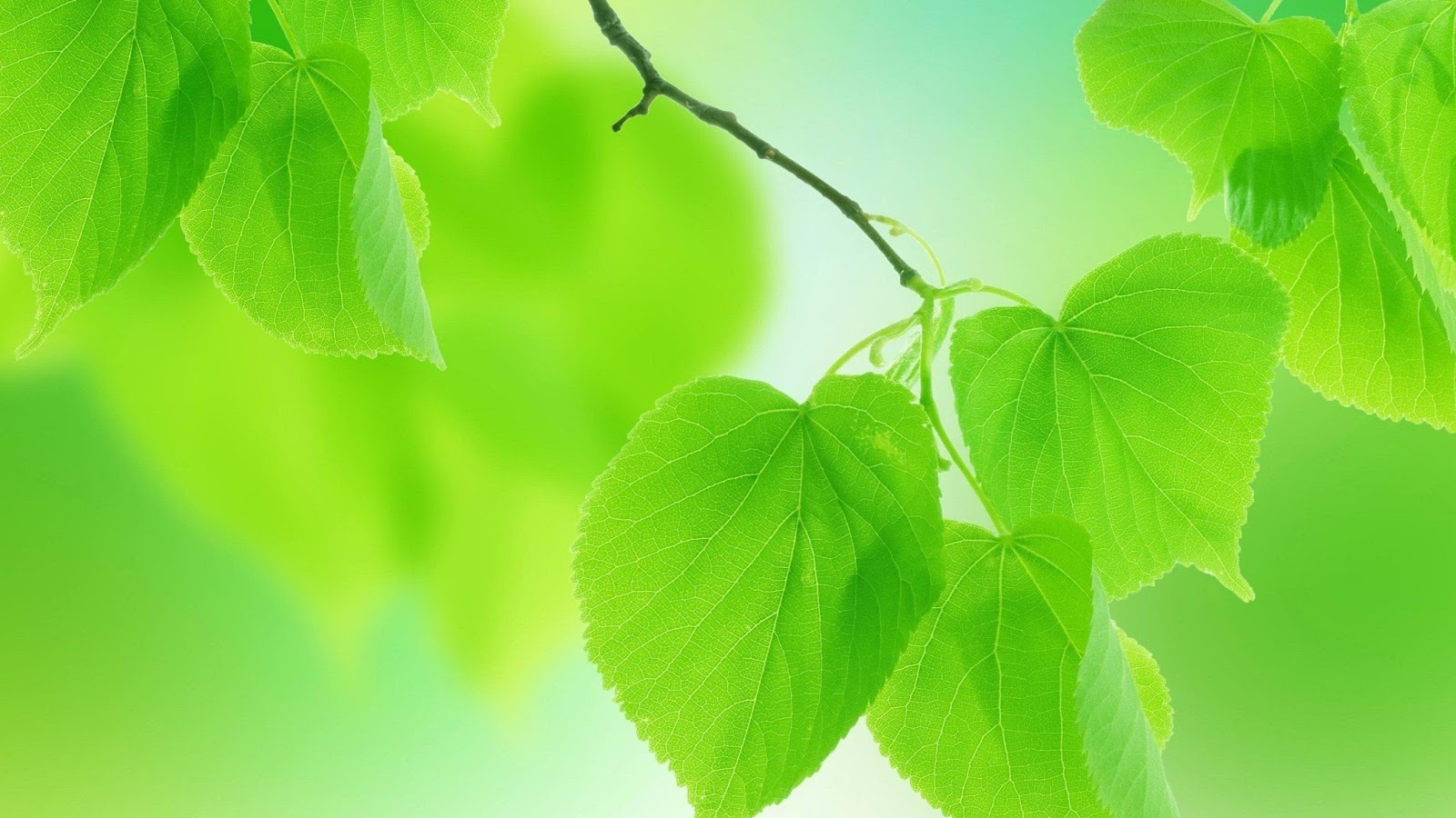 Most beautiful green hd wallpaper for iphone desktop tab and all most beautiful green leaf hd wallpaper for iphone desktop tab and all smartphone androidvallyspot voltagebd Choice Image