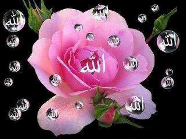 Shia Islamic Wallpapers With Quotes Allah Name On Flower Www Payamberislamic Blogspot Com