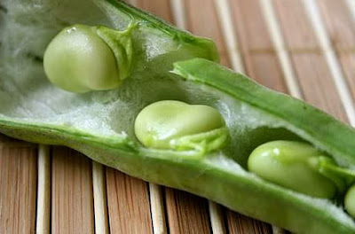 الفول الأخضر اكلة خفيفة تساعد في حرق الدهون سريعا