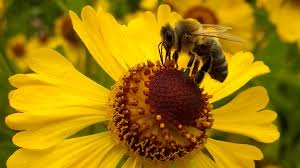 The Mysterious Connection Between Honey Bees And Mathematics
