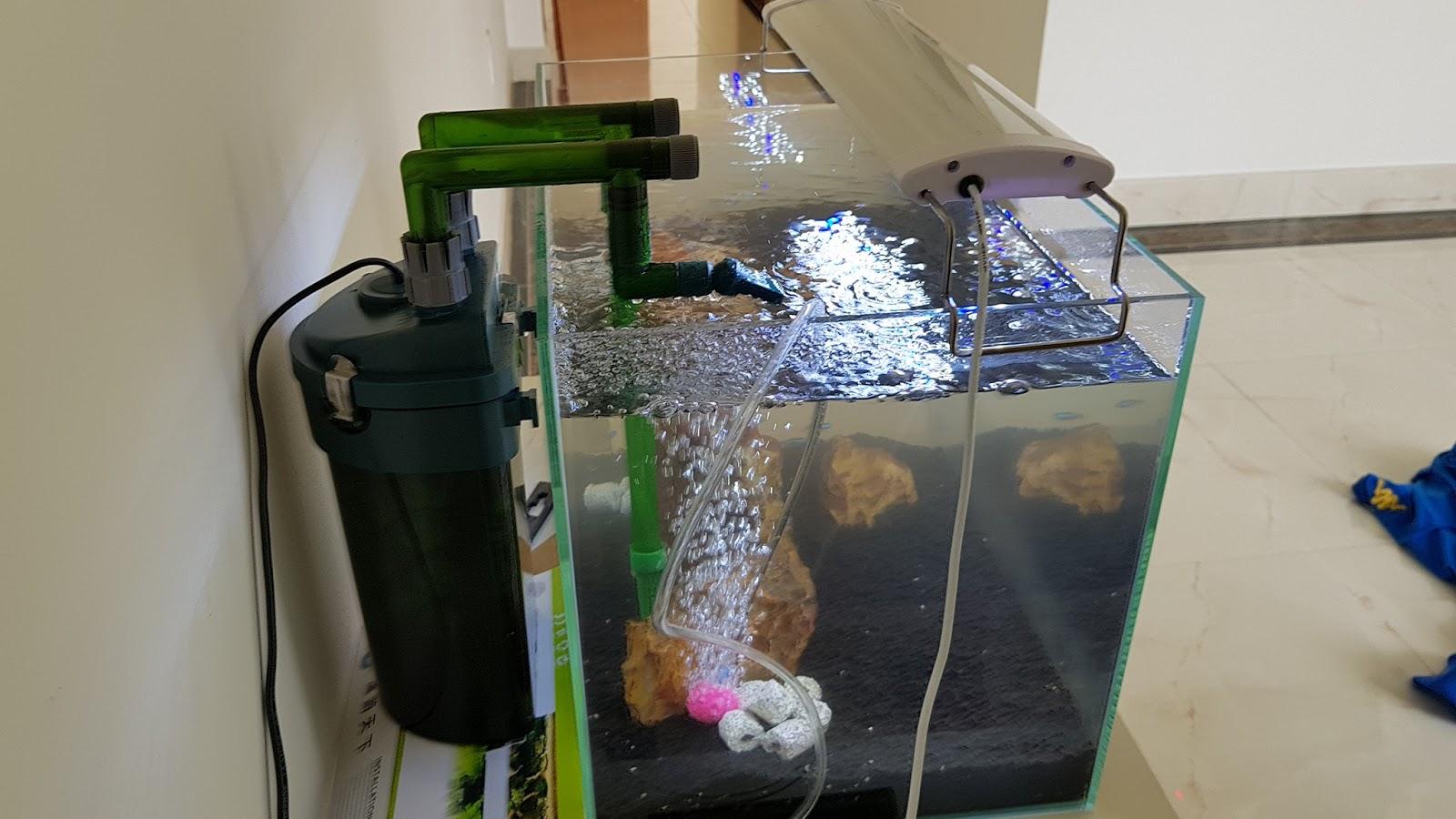 Lọc Odyssea CFS 130 trong một bể thủy sinh đang làm của người chơi