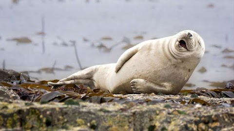 Imagens engraçadas de animais que alegrarão o seu dia