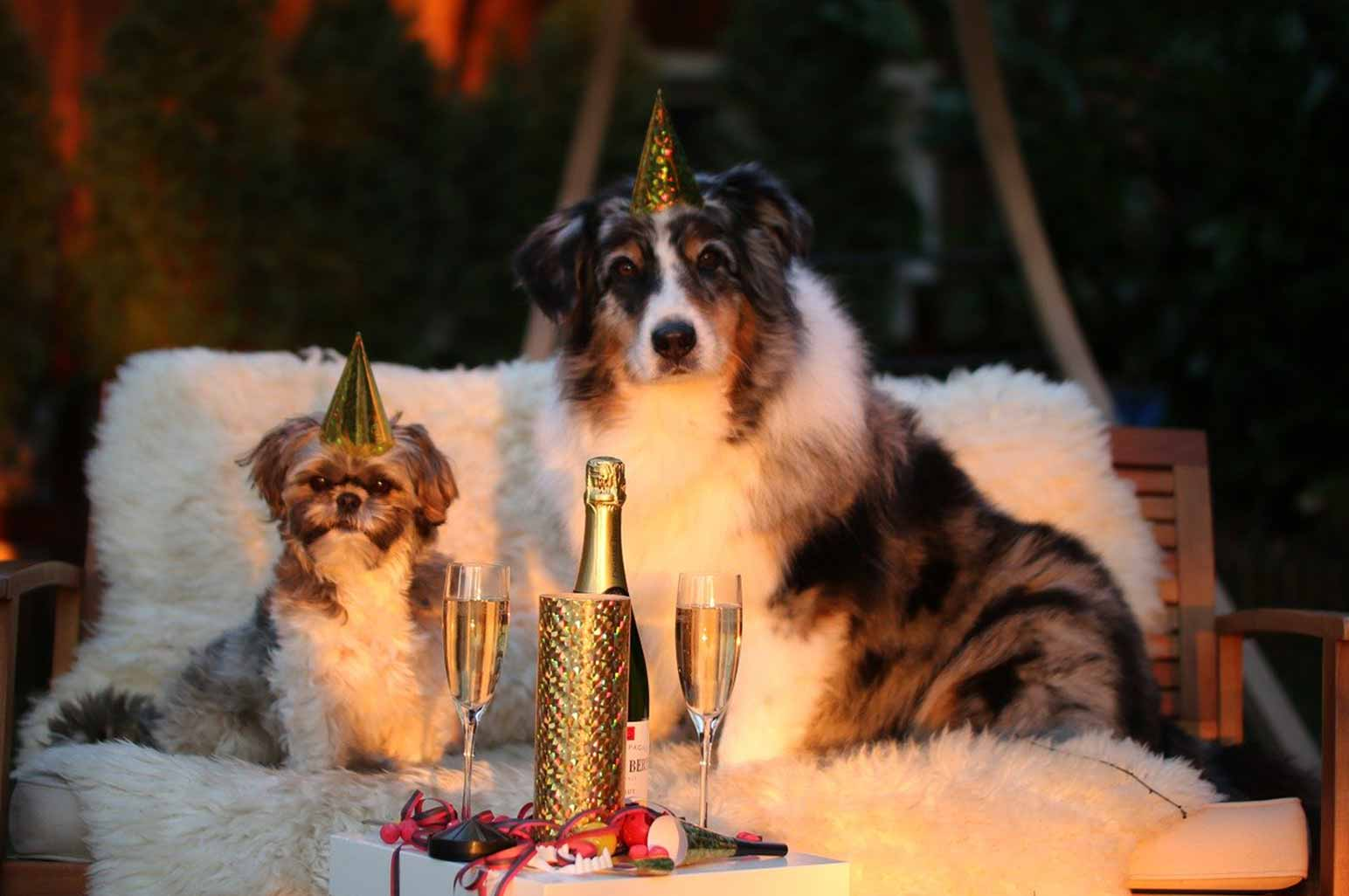 Reasons To Throw Your Dog A Birthday Party