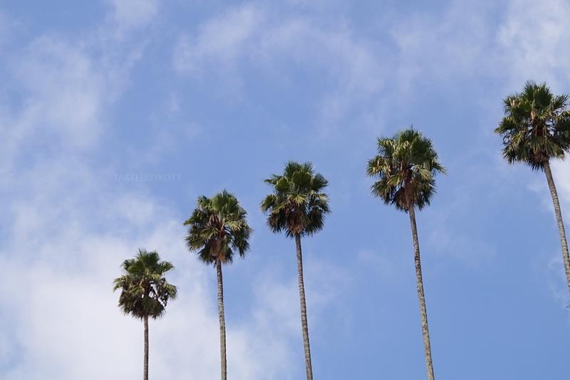Palmen blauer Himmel Sommerurlaub Porto