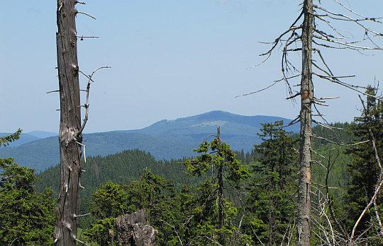 Mogielica - najwyższy szczyt Beskidu Wyspowego (1171 m n.p.m.).
