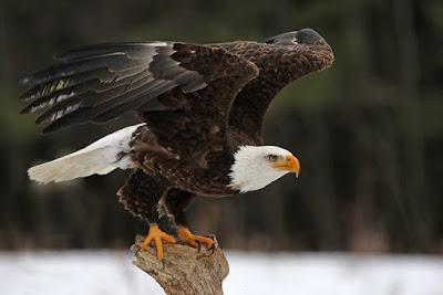 Figure: Which majestic looking bird is this?