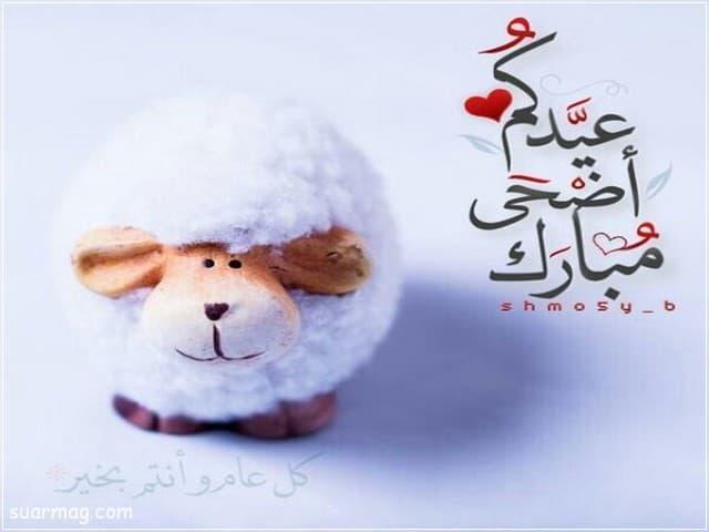 بوستات عيد الاضحى 14 | Eid Al-Adha Posts 14