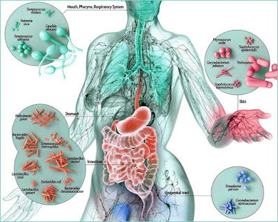 Microbes Friendly To Our Bodies!