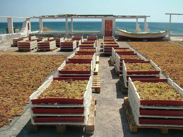 сбор винограда в Греции