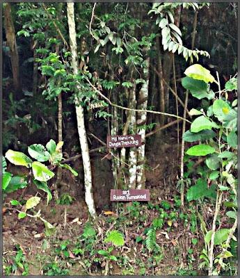 Ponohuan Tree House | MyNurul Homestay