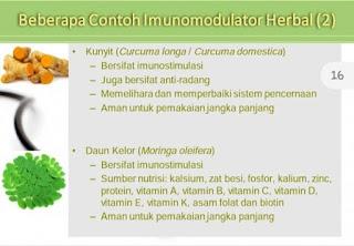 contoh imunomodulator alami