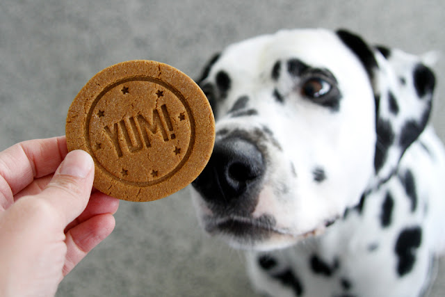 """Dalmatian dog sniffing a round homemade dog treat stamped with the word """"YUM"""""""