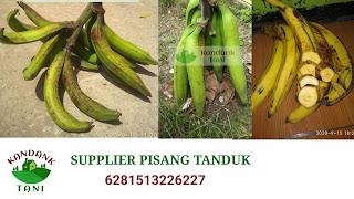 Supplier pisang tanduk