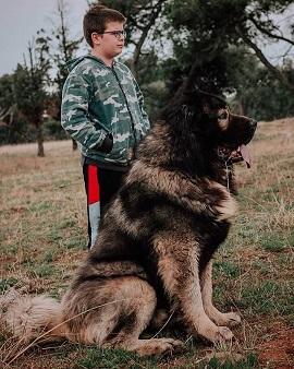 biggest dog breeds, big dog breeds fluffy, biggest dog breed in the world, biggest dog breeds in the world, big dog breeds white, the biggest dog breeds,