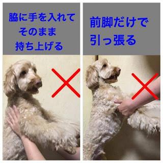 como pegar seu cão