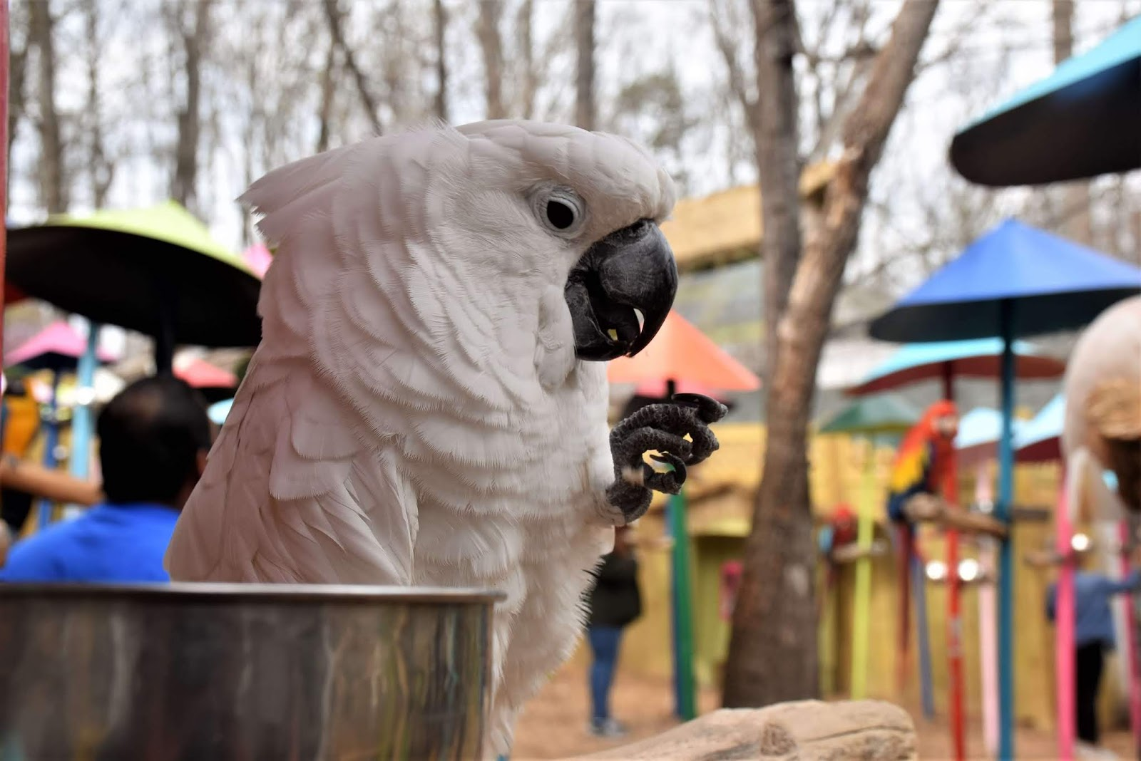 Parrot eating at Parrot Mountain