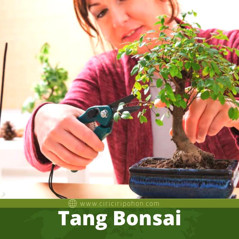 Alat-Alat Bonsai