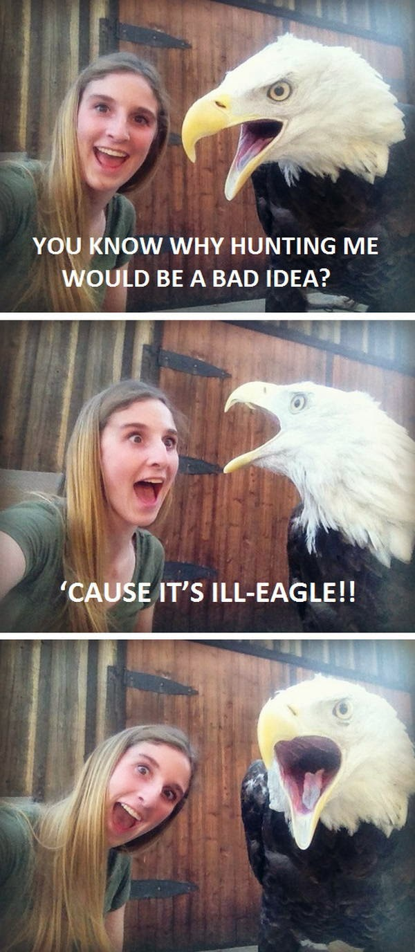 30 Funny animal captions - part 21 (30 pics), captioned animal pictures, eagle pun