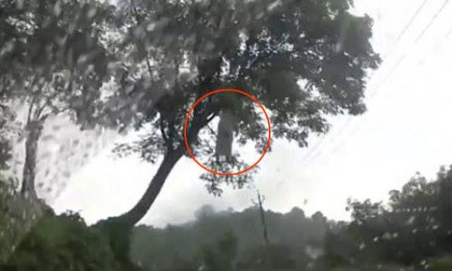 Penampakan Seram Kuntilanak Di Pohon